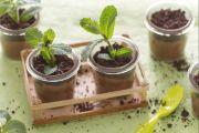 Vasetti al cioccolato e menta