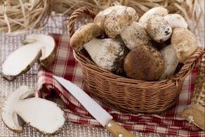 Ricetta Come pulire i funghi porcini